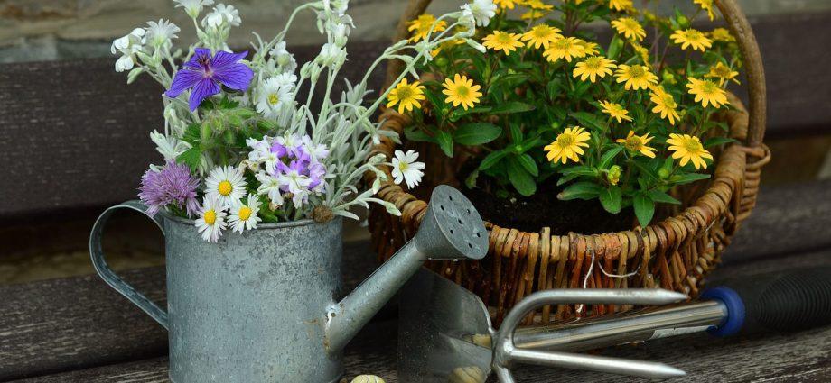 Consigli di giardinaggio per principianti